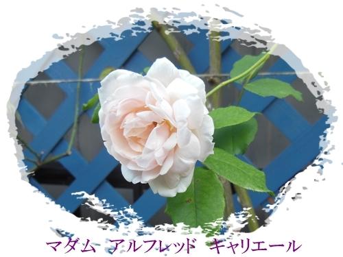 DSCN5573.jpg