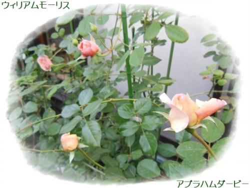 DSCN5616.jpg
