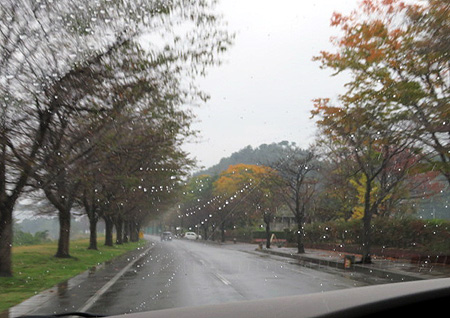 1029 雨