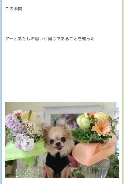 fc2blog_20171216171706ce5.jpg