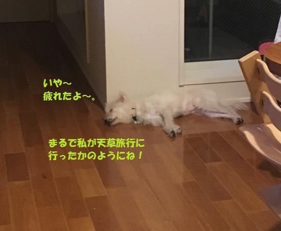 2017年11月8日④