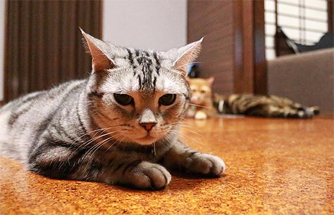 blog_000010469.jpg