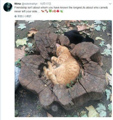 ぴったりネコ
