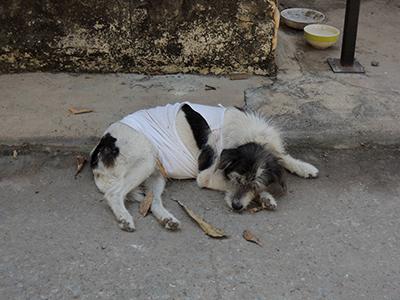 DSCN9422 犬