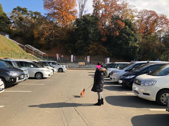 batch_010さがみ湖リゾート プレジャーフォレスト駐車場2