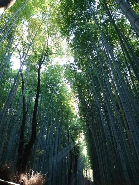 s竹林の小経