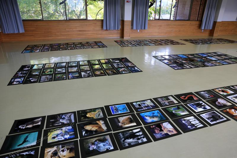 第6回とべ動物園写真コンクール