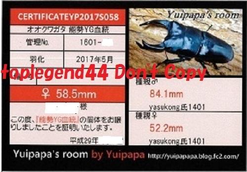 Yuipapa1601-19縮小111
