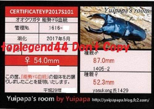 Yuipapa1616-15縮小111