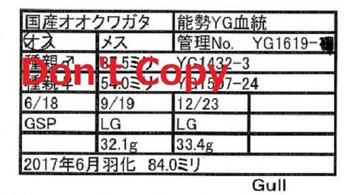 Gull氏1619♂840 112