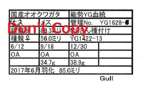 Gull氏1628♂850 112