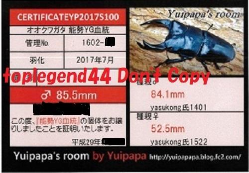 Yuipapa1602-1縮小112