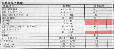 DSC08748 (2)