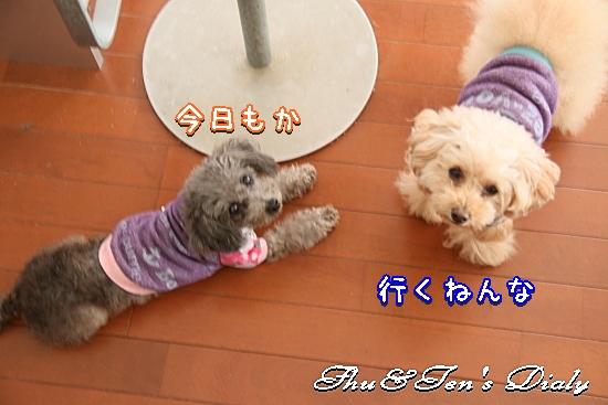 001aIMG_7033.jpg