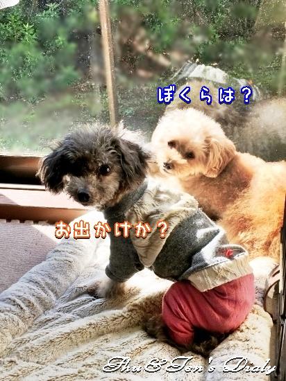 001aIMG_8644.jpg
