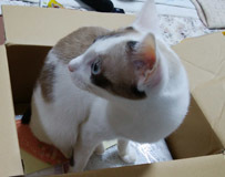 Mina 箱が好き♪1