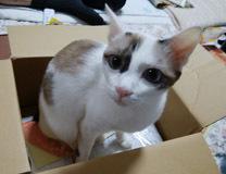 Mina 箱が好き♪2