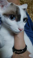 Mina 抱っこ♪