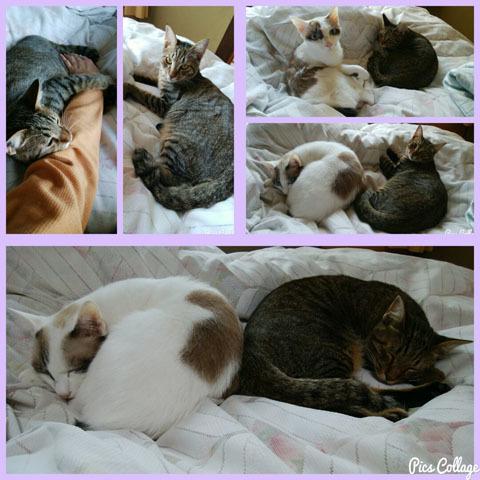仲良く眠る猫兄弟