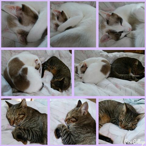 仲良く眠る猫兄弟♪