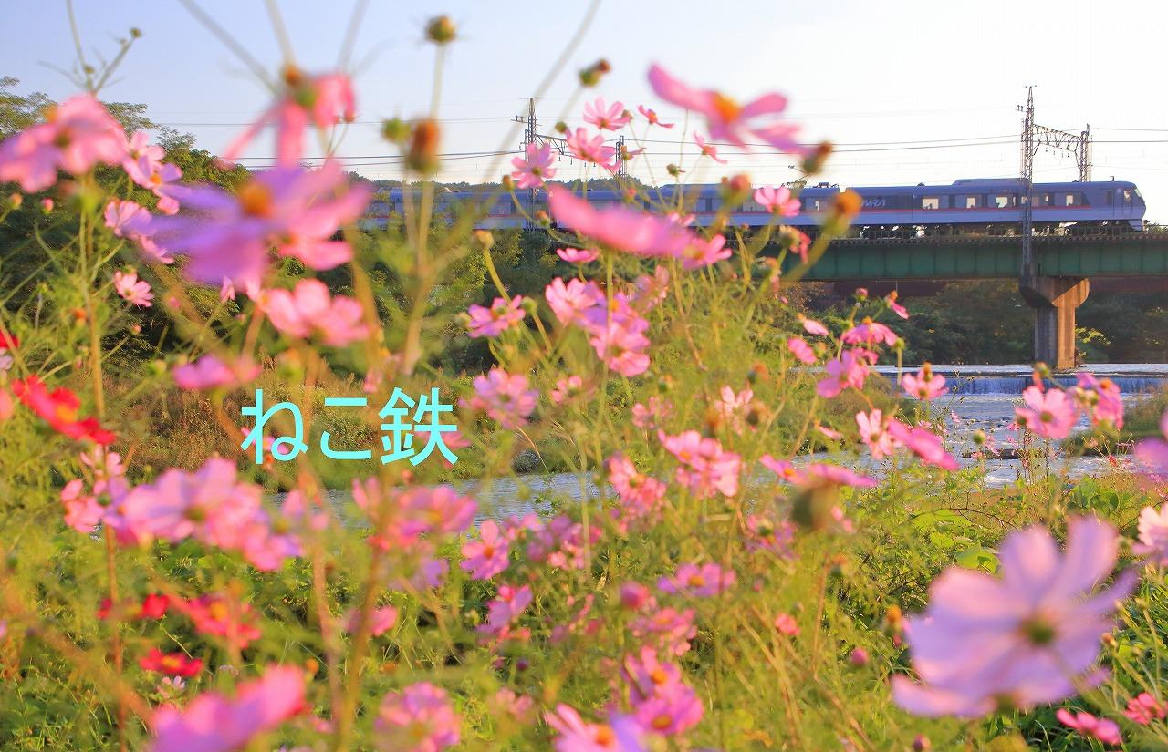 IMG_7139auto_1.jpg