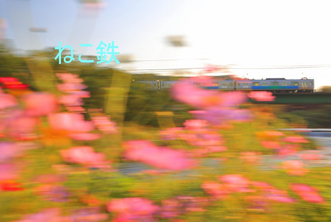 IMG_7162f5800_1.jpg