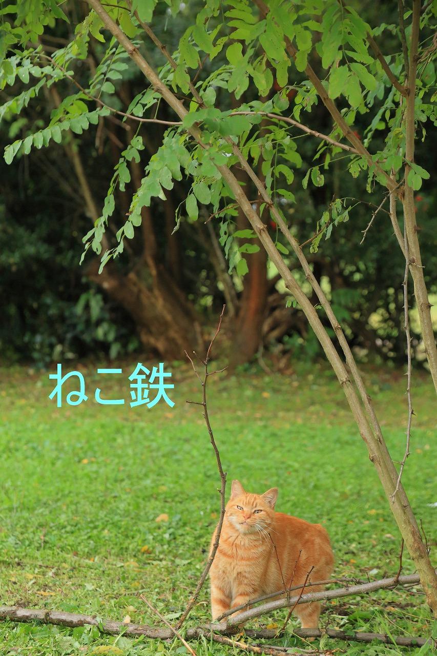IMG_7665f5100_1.jpg