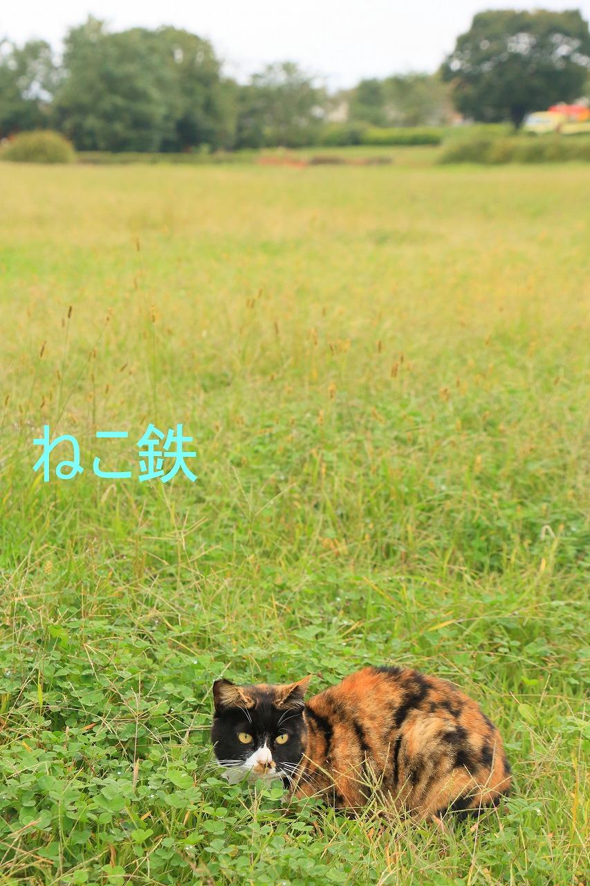 IMG_7706f5900_1.jpg