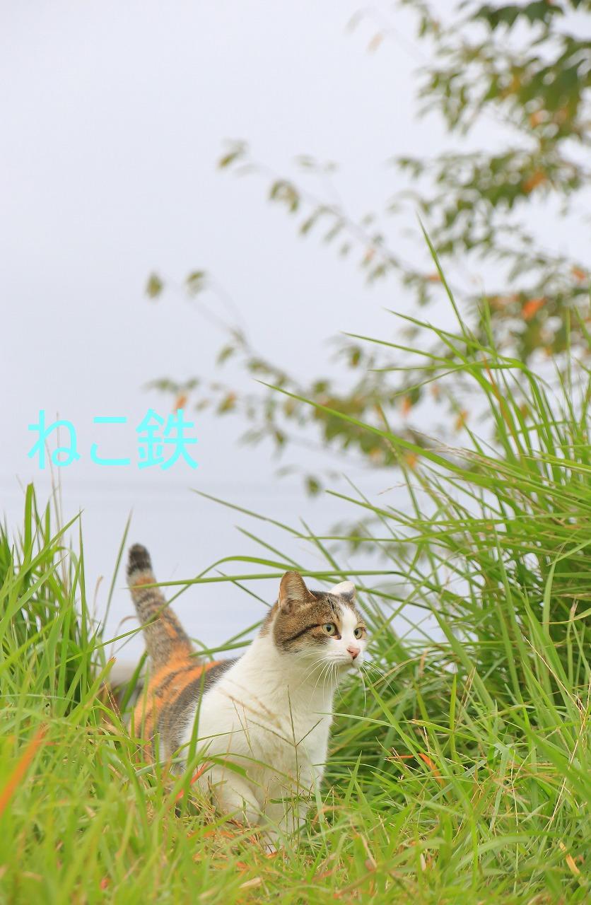 IMG_7834f6500_1.jpg