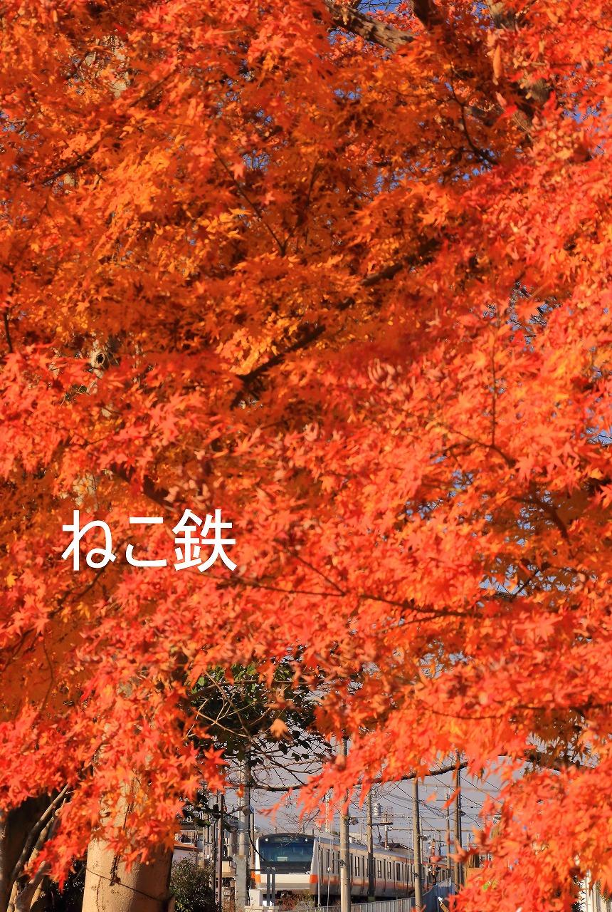 IMG_7949f6500_1.jpg