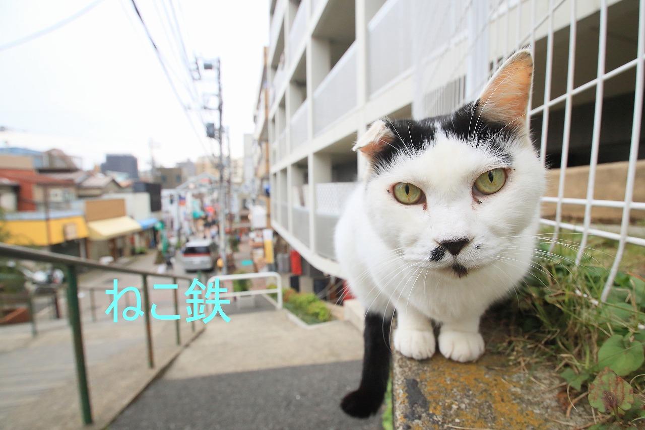 IMG_8429akarume_1.jpg