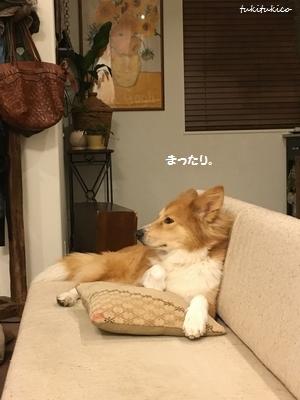 テレビを見ています1