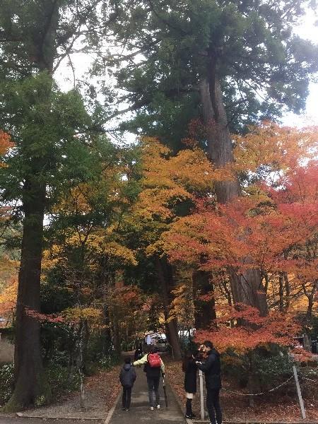 ooyata-minou-012.jpg