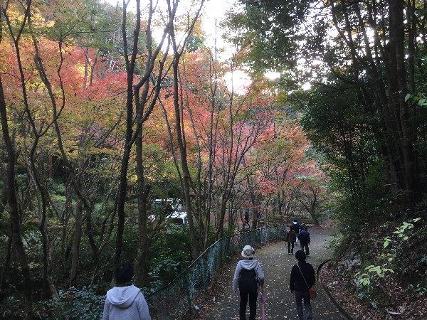 ooyata-minou-065.jpg
