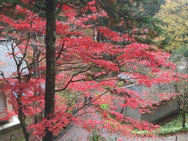 yokokuraji-tanikumi-071.jpg
