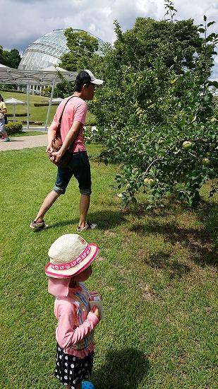 りんごの木を眺める