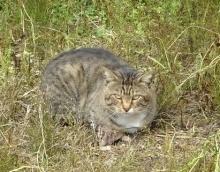 石上広高宮 猫 (2)