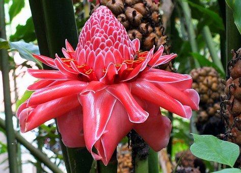 flower-2610485__340.jpg