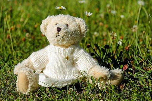 teddy-1623436__340.jpg