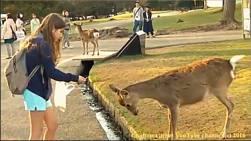 お辞儀をする鹿