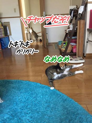 S_6853804521172.jpg