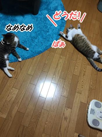 S_6898780373248.jpg