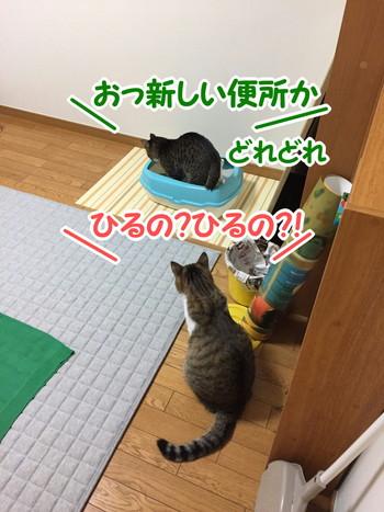 S_7079761895469.jpg