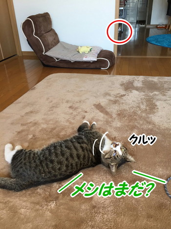 S_7079762027937.jpg