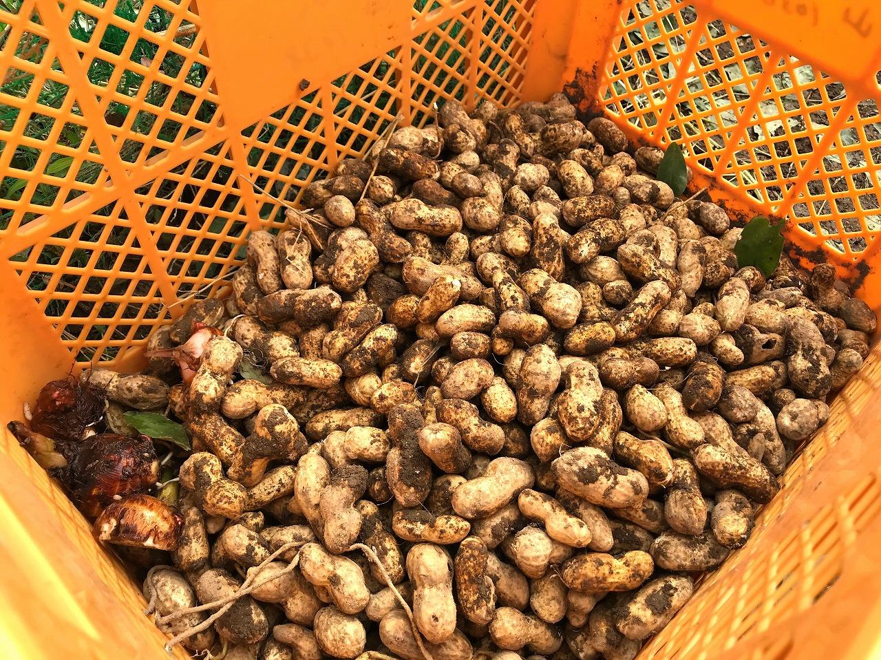 20171014-Peanut_Harvest-I02.jpg