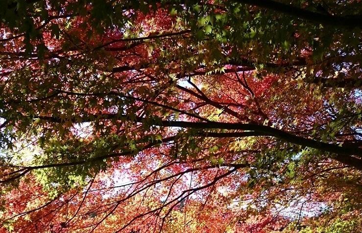 秋を切り取る2