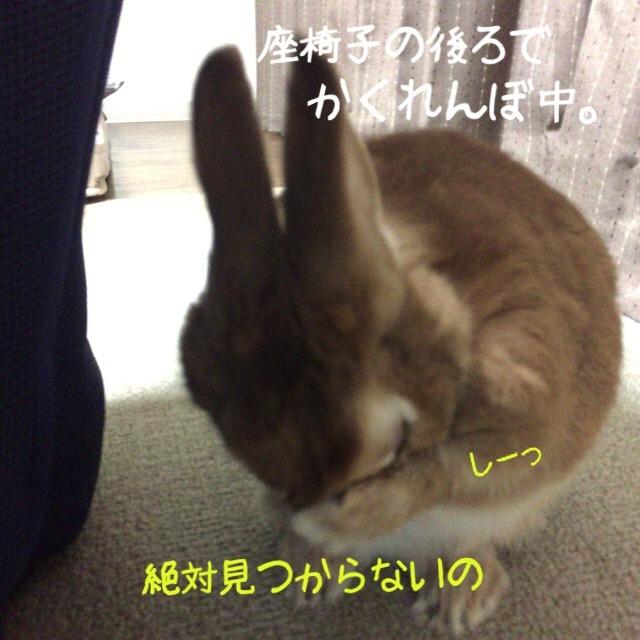 image4 (16)