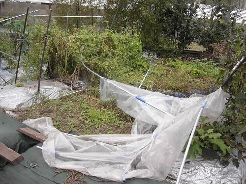 20111111_台風被害