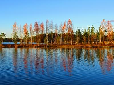 湖と枯れ木