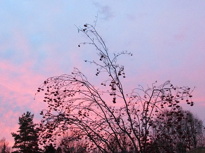 夕焼け空とナナカマド